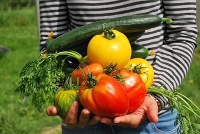 vegetables 742095 1920